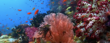 Coral Reef with Ian Somerhalder - Nature Is Speaking