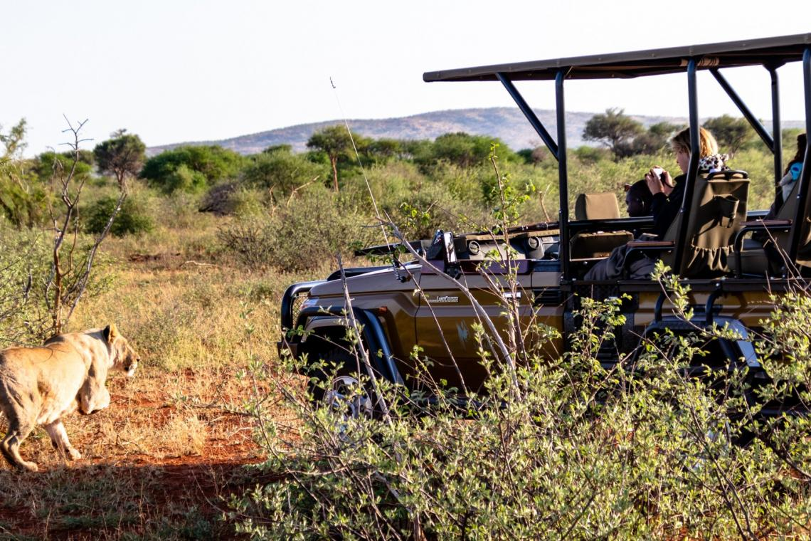 Your guide on where to go on safari near Johannesburg