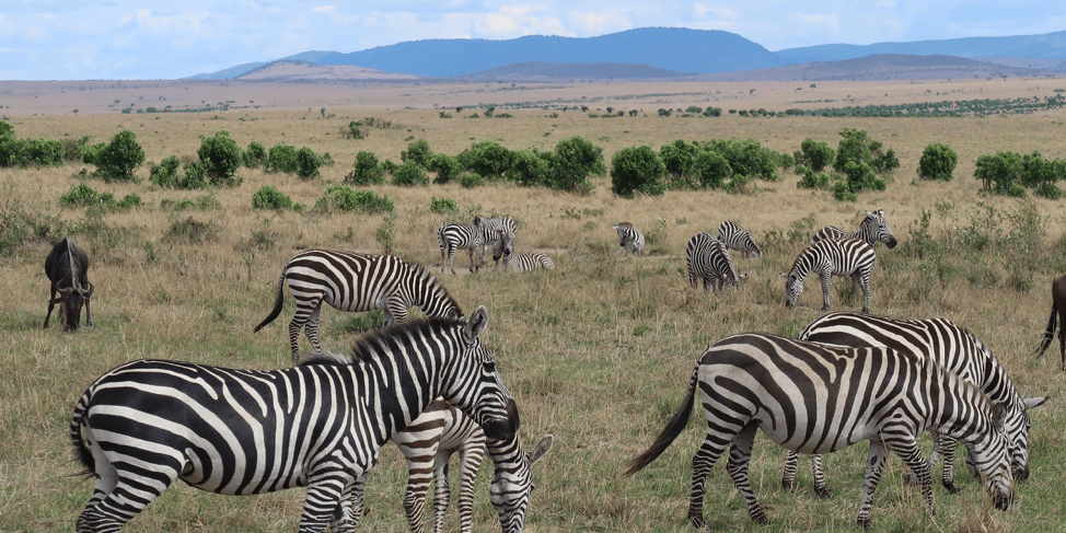 How to do a sustainable African safari - limit environmental