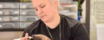 The Endangered Pangolin and Johannesburg Wildlife Vet's Brave Fight for Their Existence