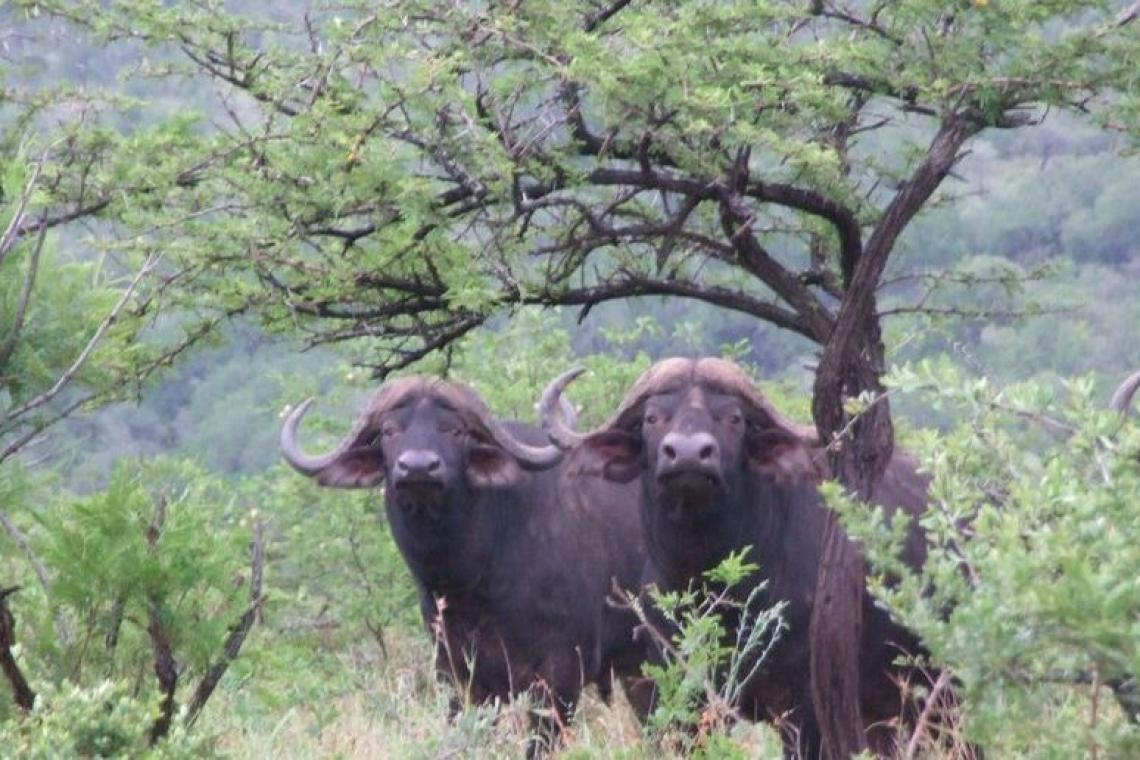 Umfolozi Big Five and the Mthembu Lodge: Old, New, Borrowed & Blue
