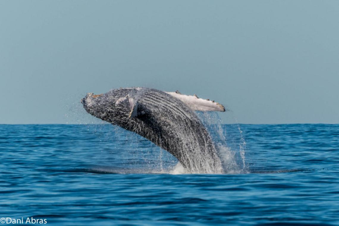 Whale-Watching Tour in Cape Town: Viewing the South African Whale Population Recovery