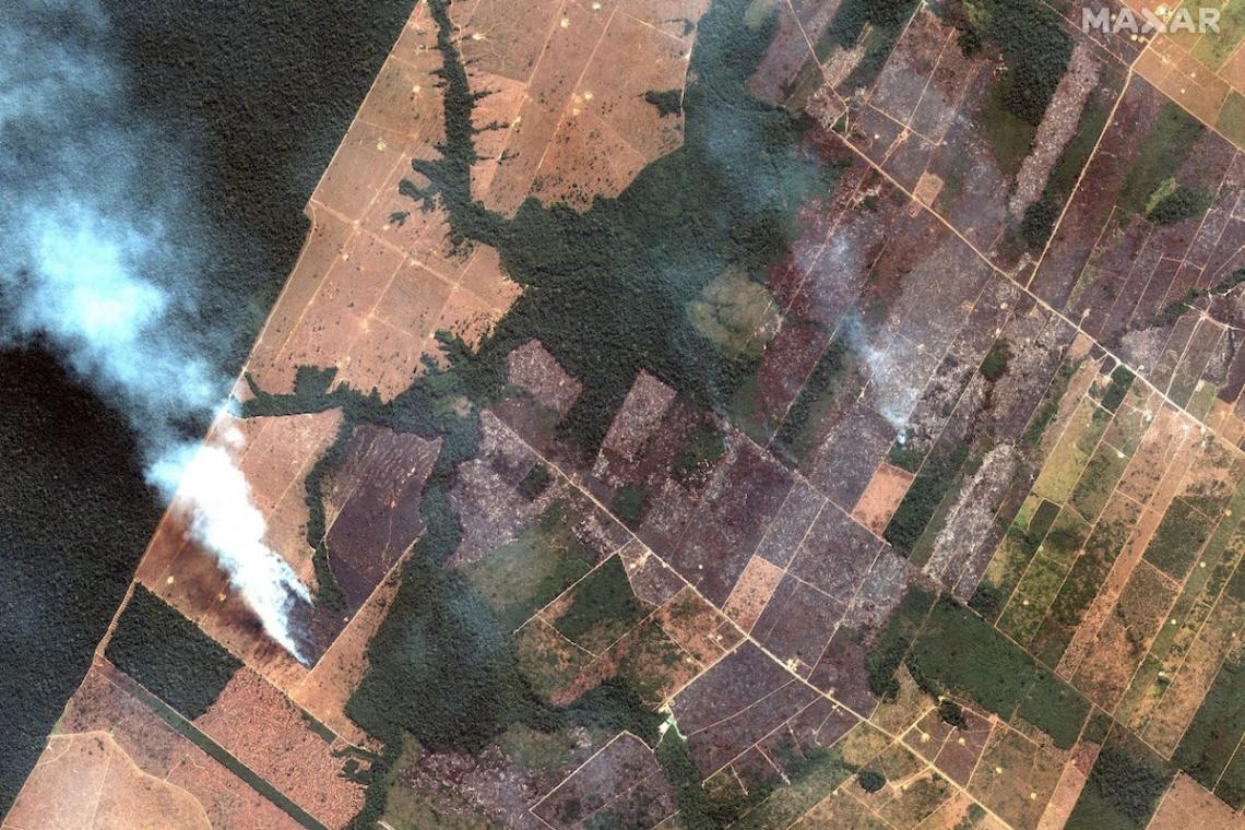 The Amazon Rainforest fires: how to douse the flames