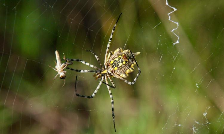 Scientists Demand 'Paradigm Shift' After Study Shows 'Frightening' Decline of Insects and Spiders