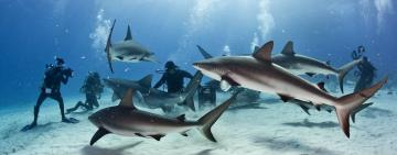 Understanding shark attack statistics, who is the hunted here?