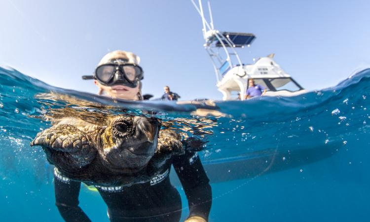 Cape Town Two Oceans Aquarium Release 34 Rescued Sea Turtles, Alvi too.