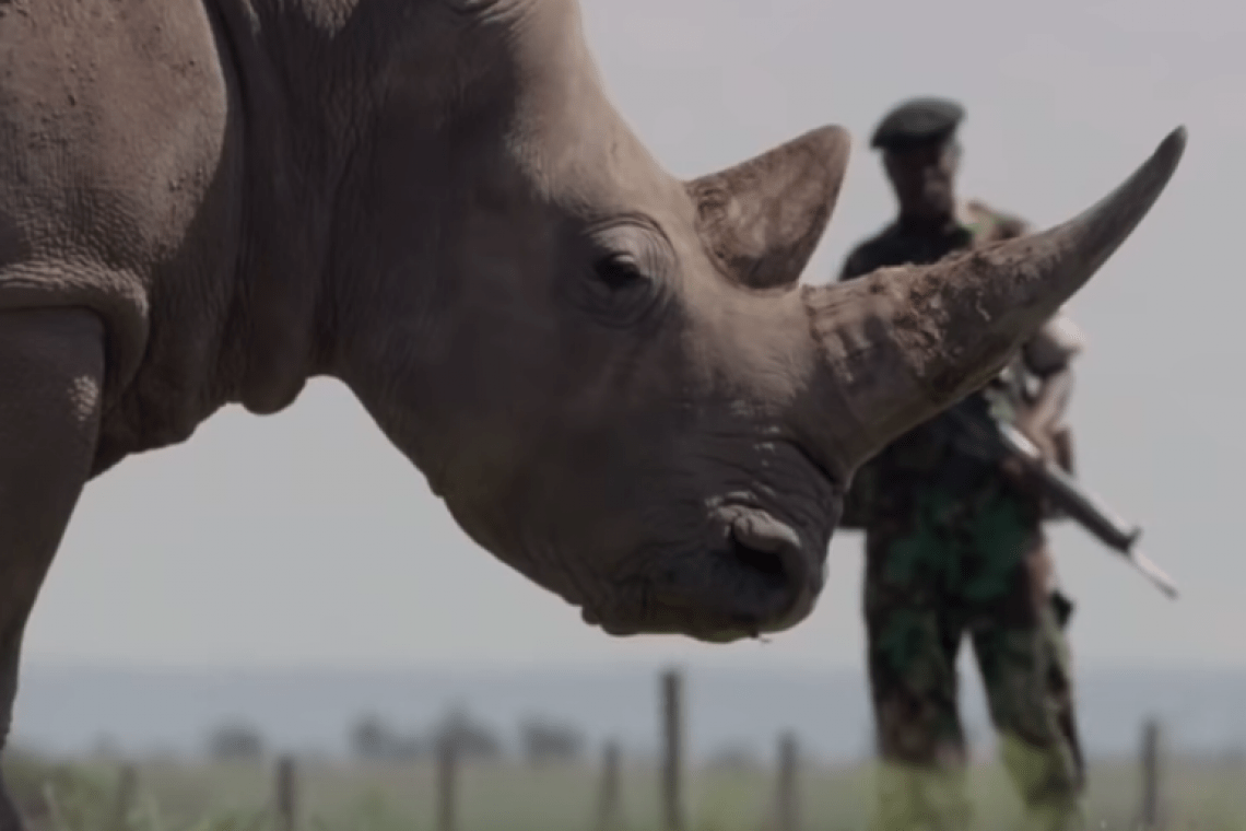 Top 5 Inspirational Animal Conservation Stories