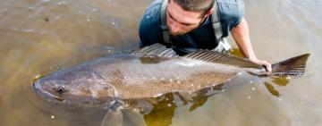 Anglers and Scientists Fight to Save the Dusky Kob