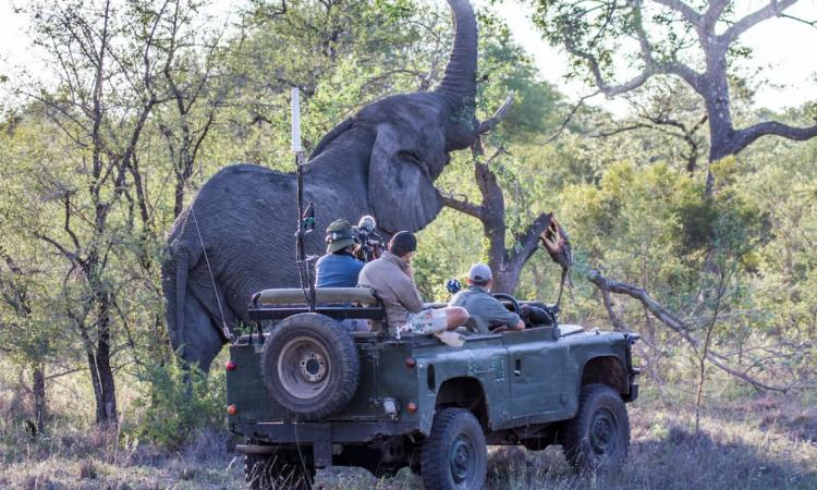 Virtual Safaris by WildEarth and &Beyond Satisfy Nature Cravings