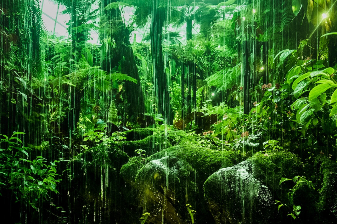 Save the Rainforests to Save Our Planet