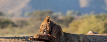 Tswalu Kalahari Reserve: Celebrating Conservation Efforts Amidst Covid-19 Pandemic