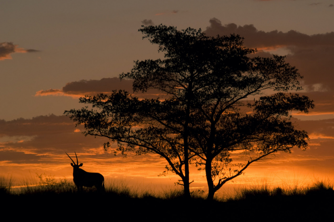 What does a declining natural world mean for our well-being in Africa?