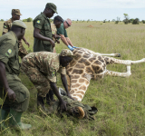 Uganda: Rangers raise awareness for wildlife conservation as park funding plummets due to lost tourism