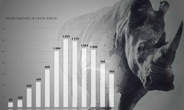 Wildlife zones to protect all of South Africa's rhino