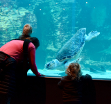 Two Oceans Aquarium: World Class Conservation for 25 Years