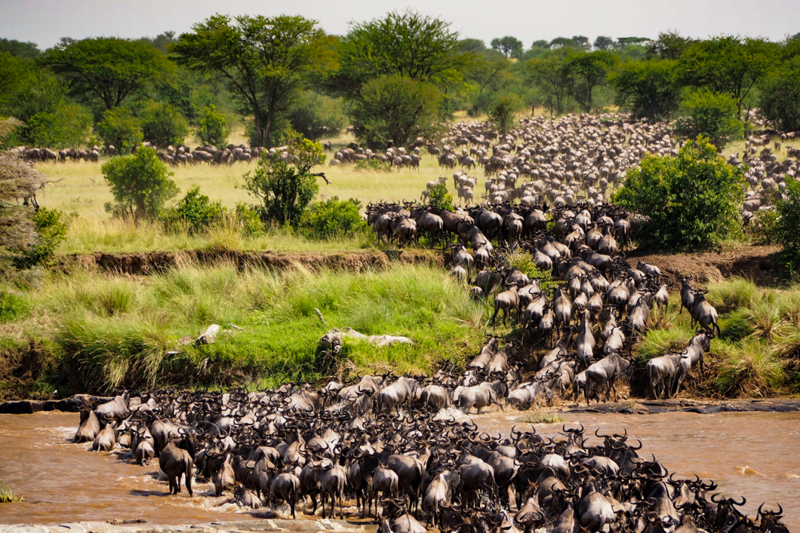 The Great Migration in Africa - Unwitnessed