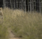 Fence for Conservation: South African Documentary Film