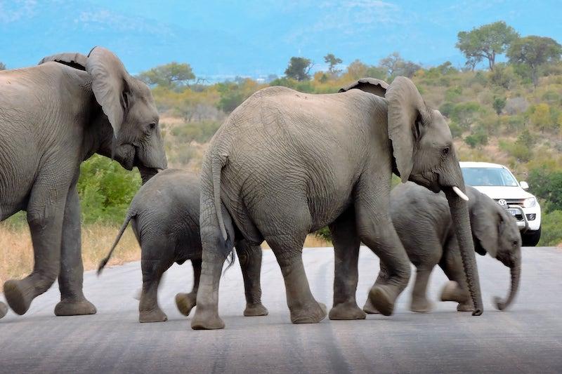 image de Malelane Gate Kruger National park