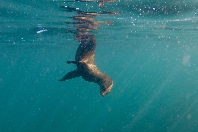 image de Bucket List Seal Snorkelling Hout Bay