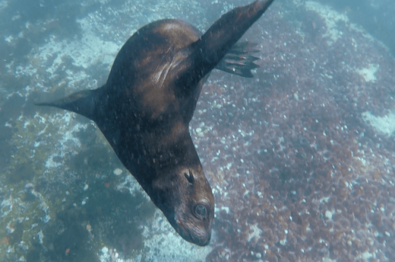 image de Bucket List Seal Snorkelling Hout Bay