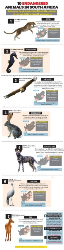 10 endangered animals in South Africa